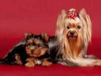 Собака — полное описание животного, лучшие породы, питание, размножение, фото, уход, видео, отзывы,