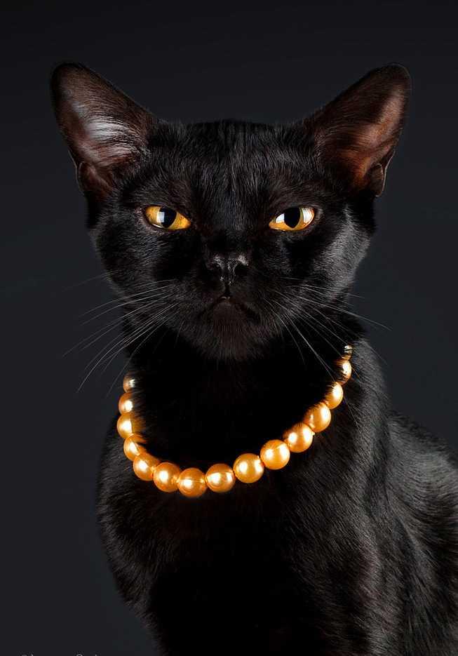 может кто черные приодетые кошки картинки что такое теплый