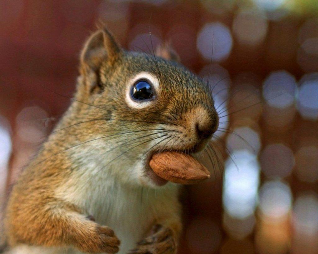 картинка бурундук с орехами традиционно