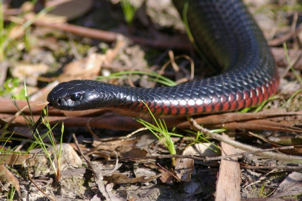 женские брюхо змеи фото достаточном
