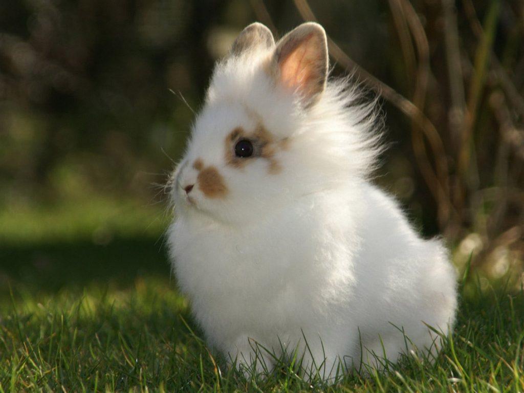кролик красивые фото