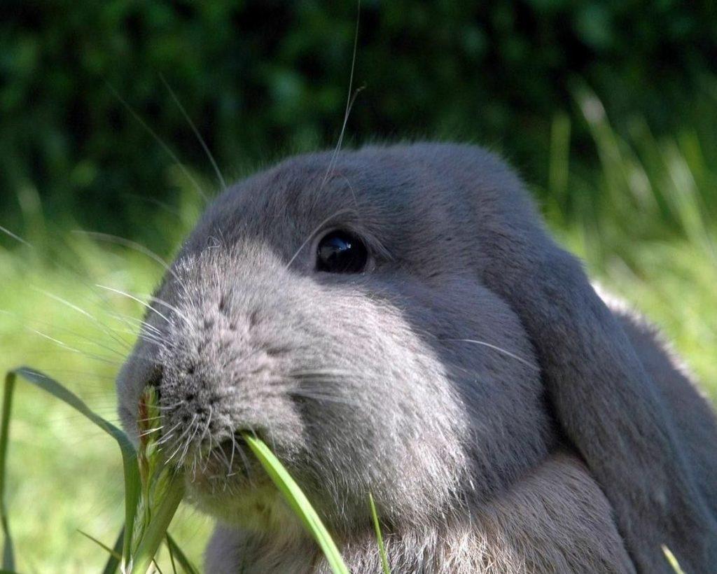 Картинки жующих кроликов