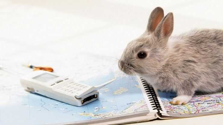 Правильный уход за кроликами