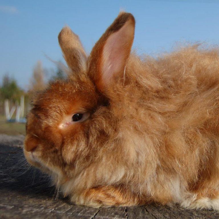 картинка лохматый заяц кофта большого размера