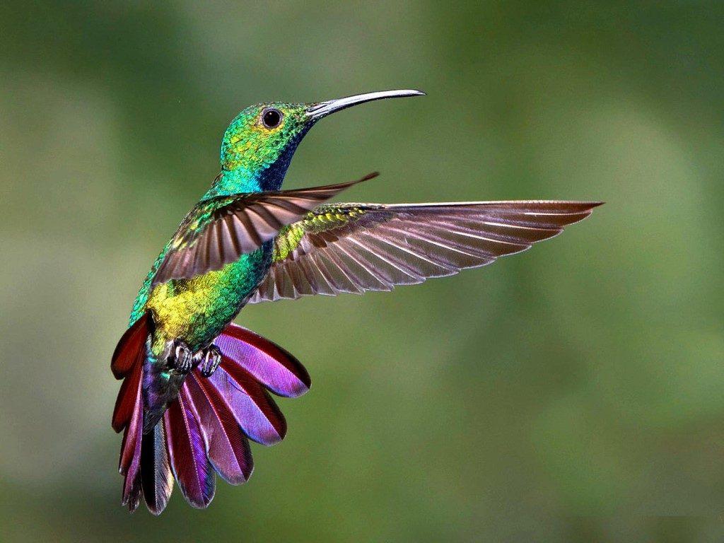 Животные картинка колибри них было