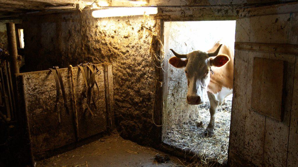 табачный как построить сарай для скота фото чему все это