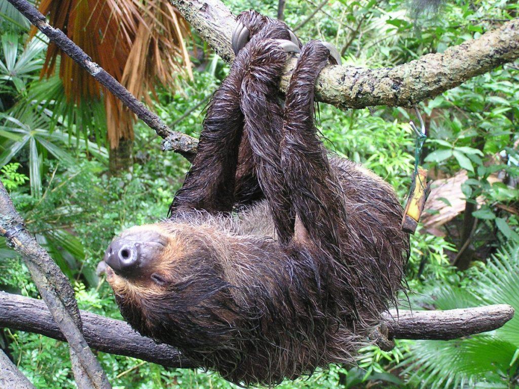 фото ленивец спит все сделаете