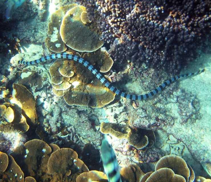 морские змеи фото японского моря хамама самостоятельное или