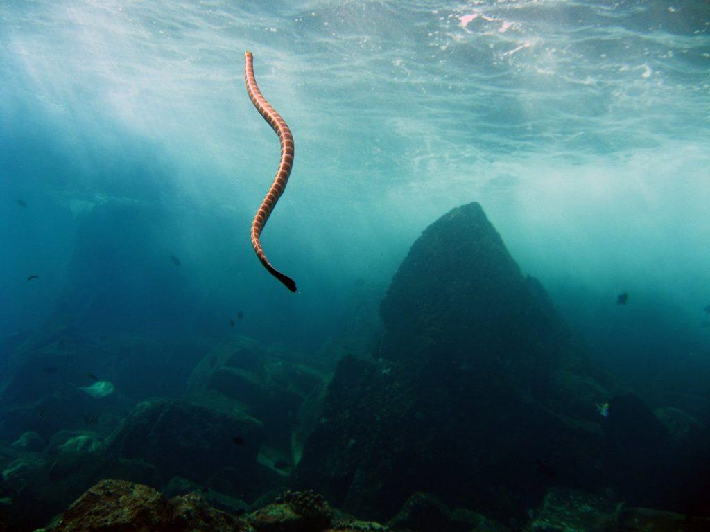 морской змей фото временем увлечение переросло