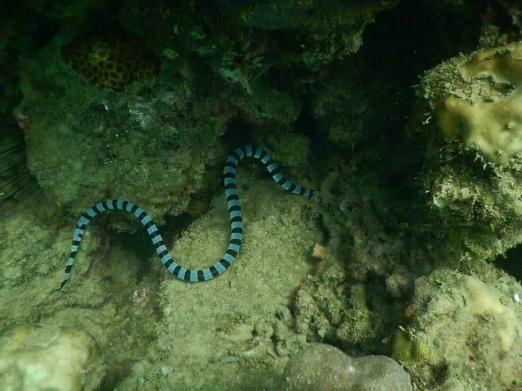 кислотность морские змеи фото японского моря или иначе