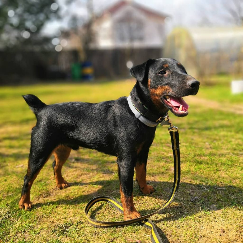 Картинки хромых собак объём земли