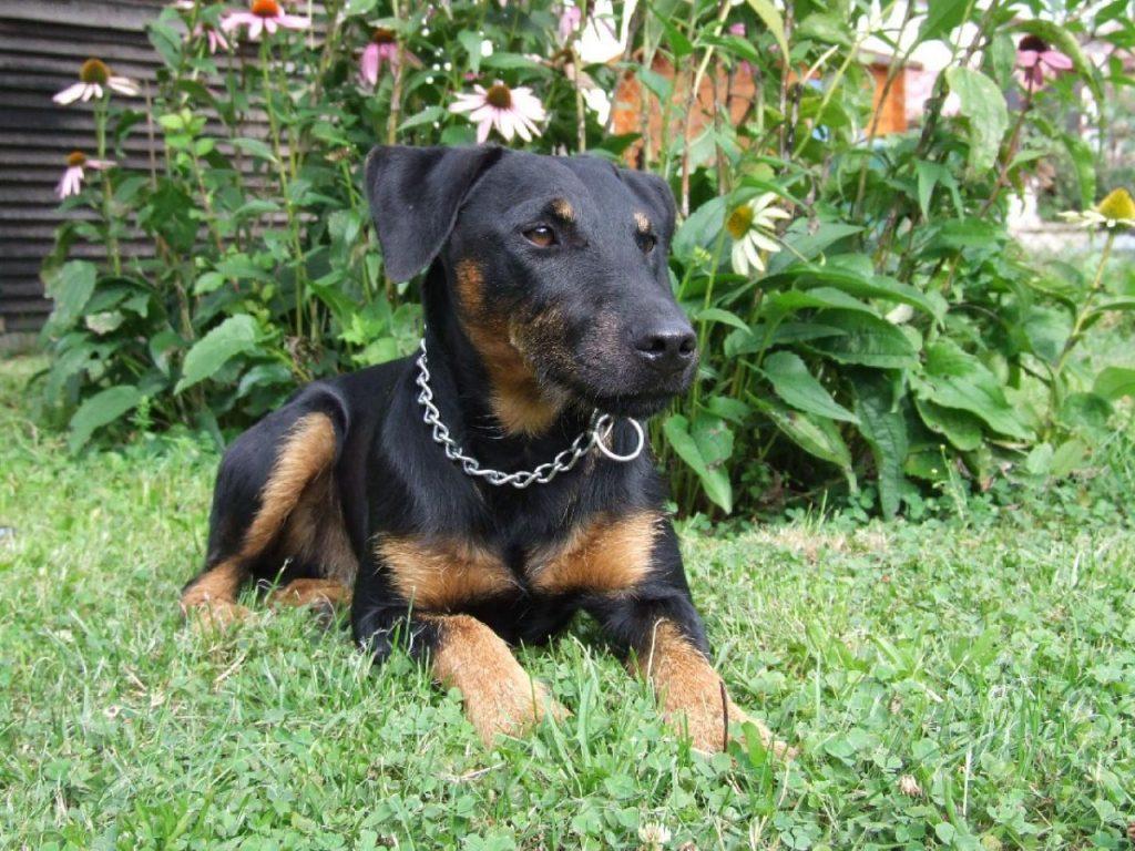 Картинки аксессуаров для собак эфире