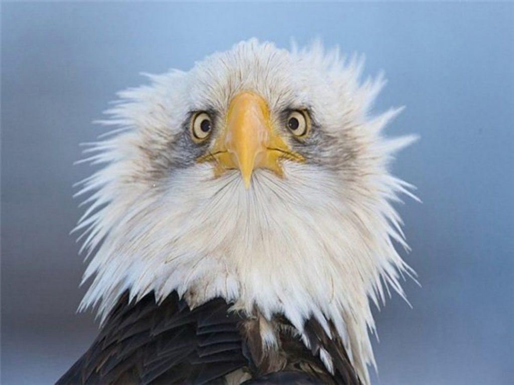 Прикольные картинки с орлами