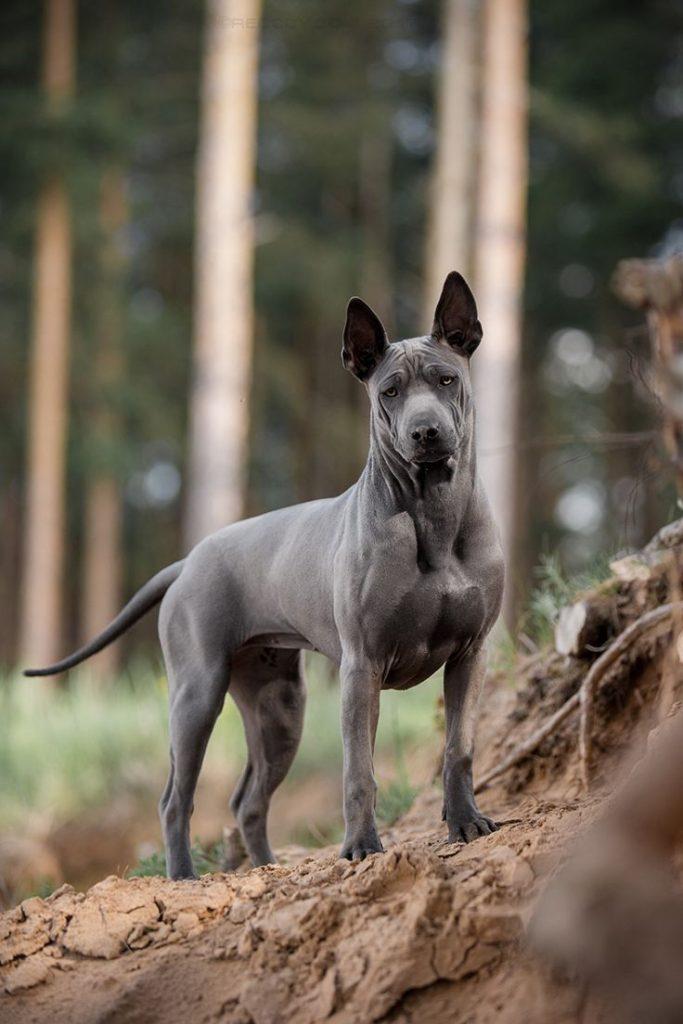 Экзотические собаки картинки
