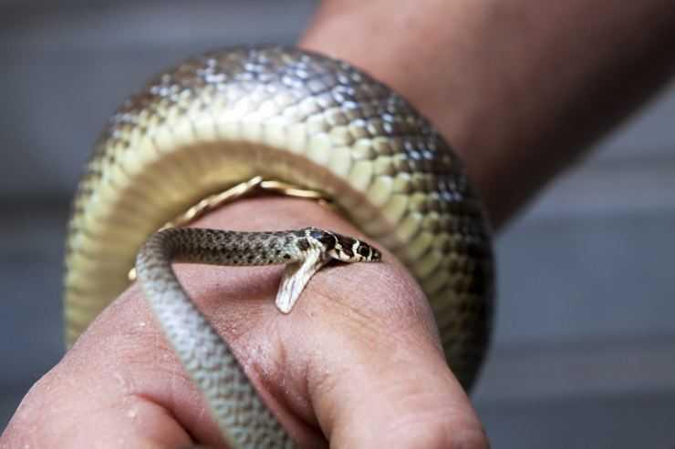 Укусы змей - опасные или нет, что делать в первую очередь после укуса и как его можно избежать читайте в статье!