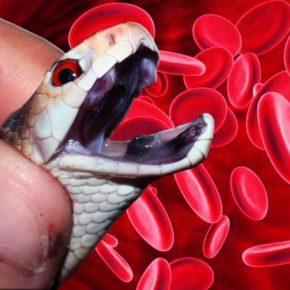 Укусы змей — опасные или нет, что делать в первую очередь после укуса и как его можно избежать читайте в статье!
