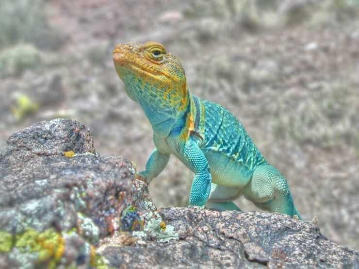 Виды ящериц — общее описание пресмыкающихся, виды, особенности, характеристики рептилий
