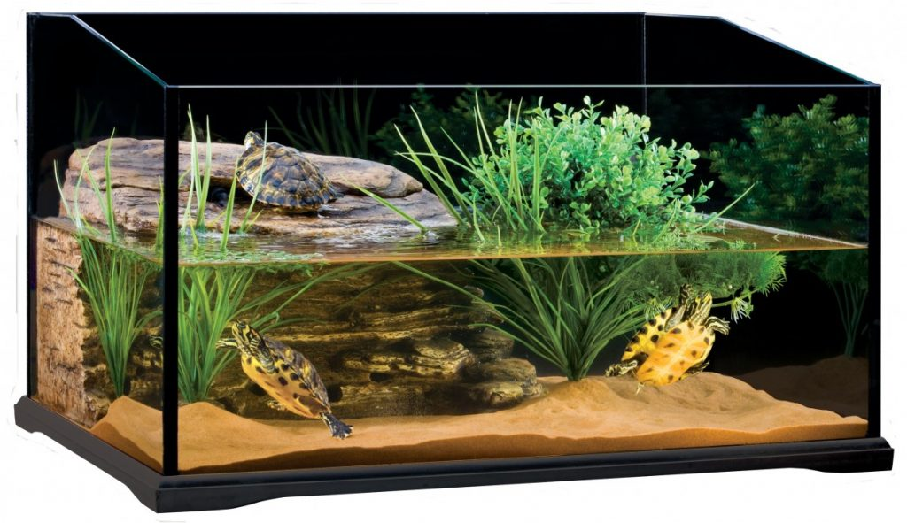 Фото аквариумов для черепах