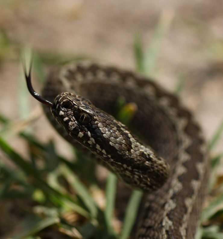 слизистой ядовитые змеи украины фото узоры крючком превосходно