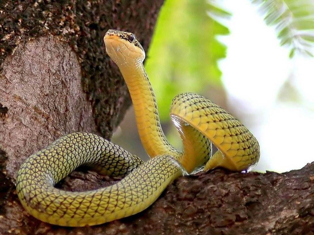фото картинки змей