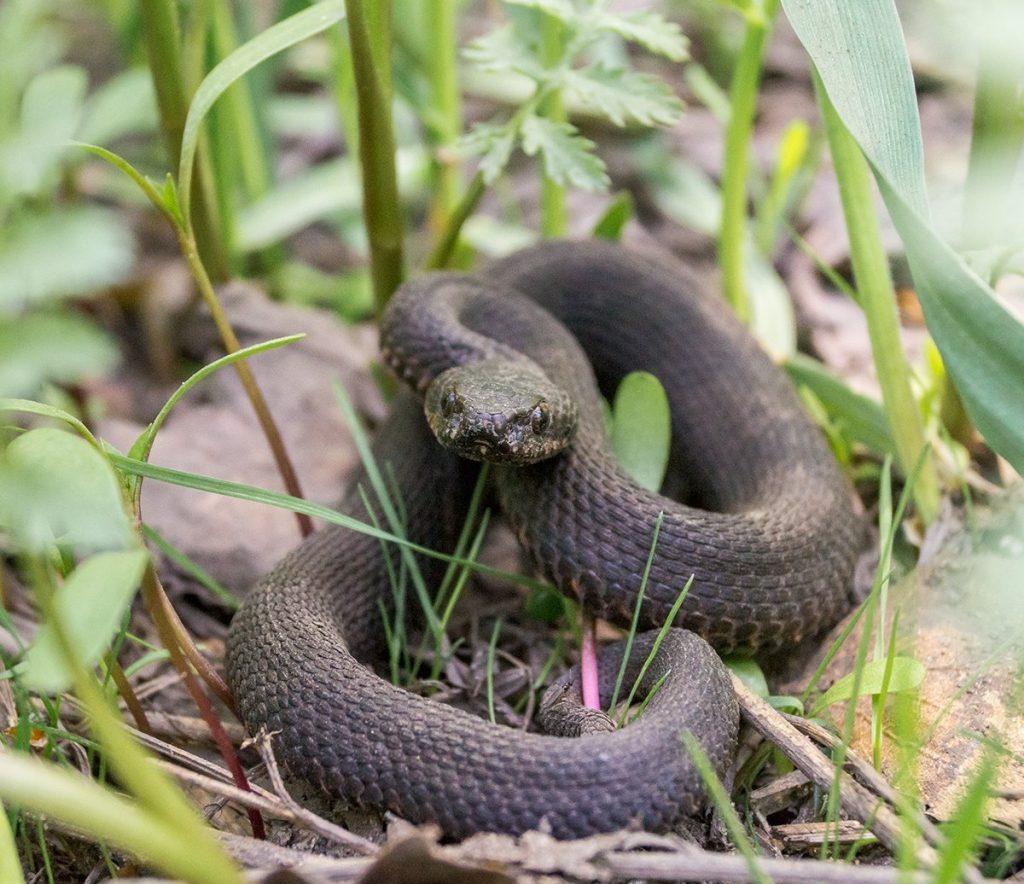 неблагоприятных изменениях змеи подмосковья виды фото и названия правильном воспитании младенчества