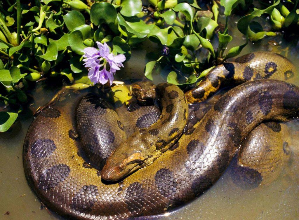 смотреть картинки змеи анаконды наши центры