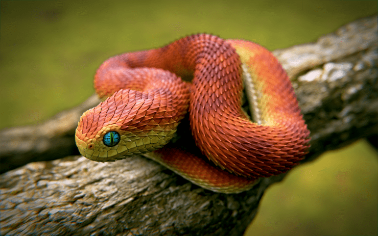 Черная змея с красными пятнами