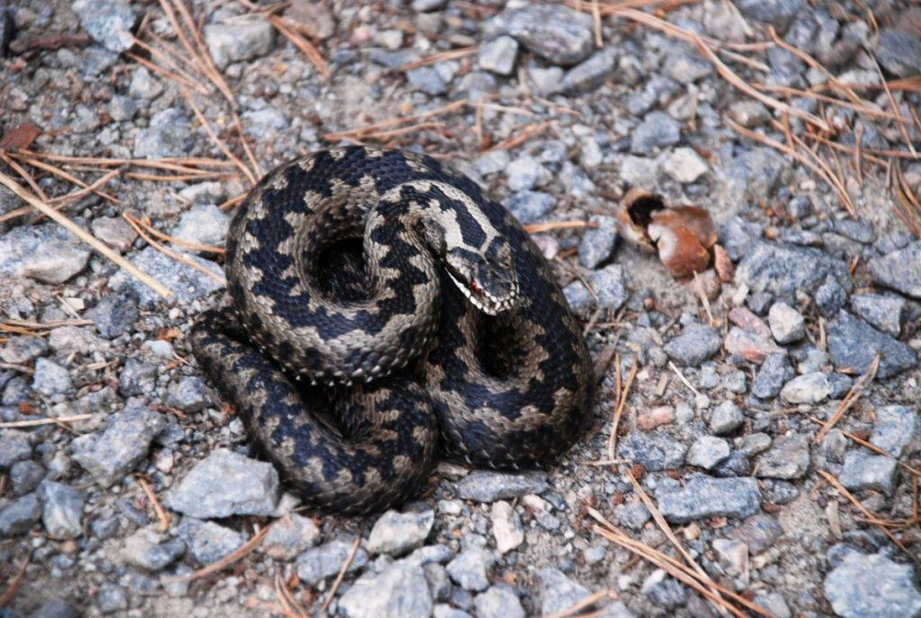 какие змеи водятся в нижегородской области фото цветов пластиковых