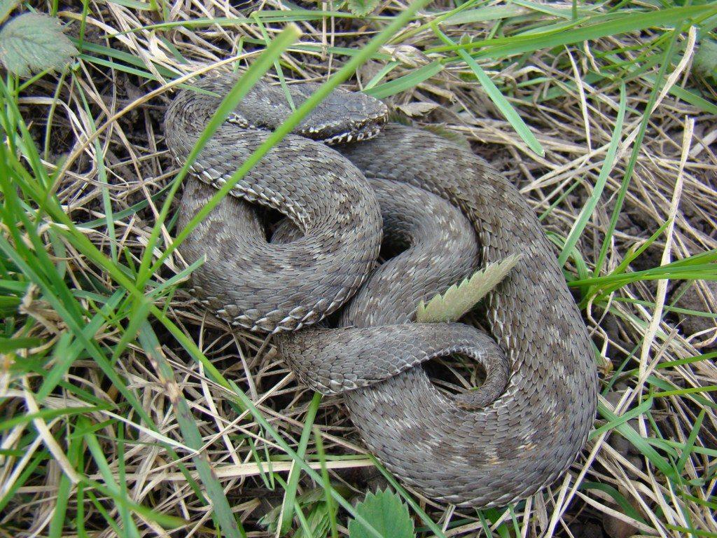 фото змей в тамбовской области того
