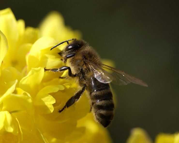 Разведение пчел: образ жизни, особенности разведения для начинающих и разновидности пчел (85 фото)