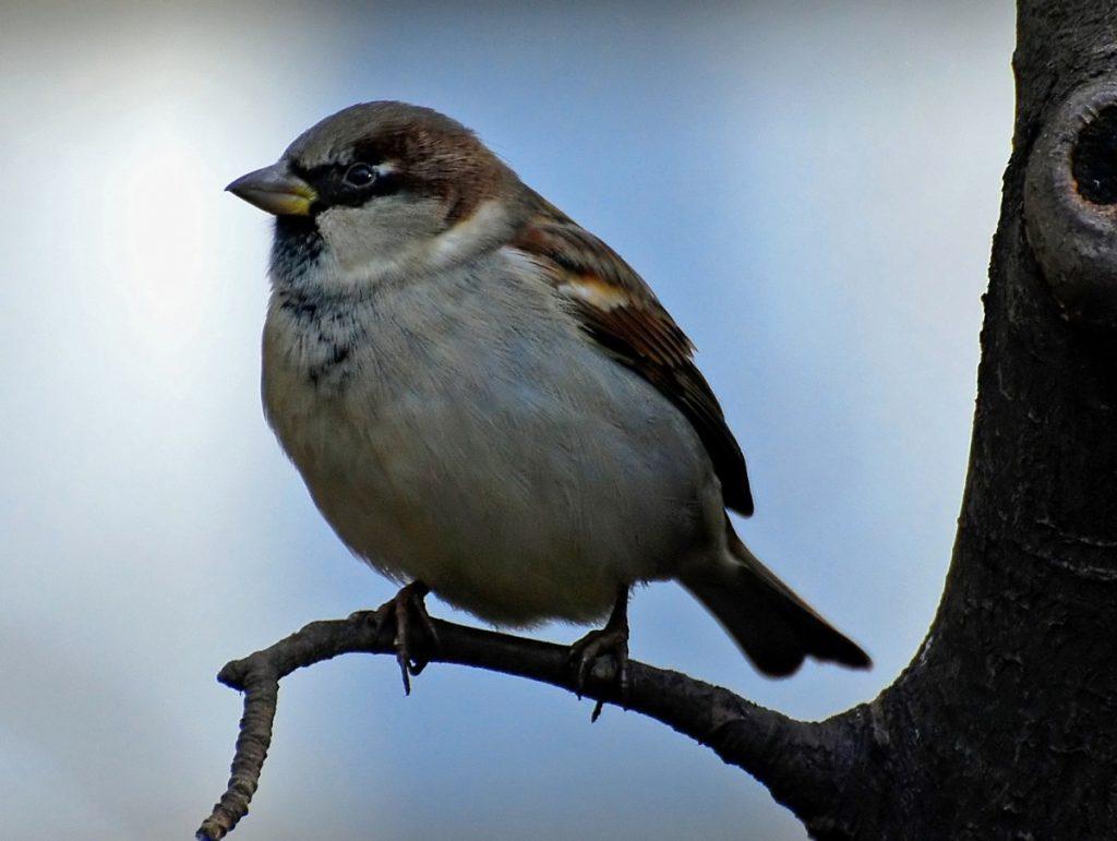 отдельности картинка птичка сидит известно, еще придумана