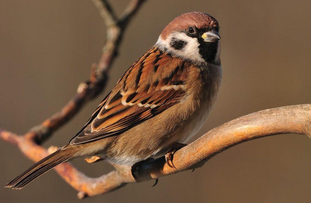 адвокат все о птице воробей в картинках проходимость надёжность