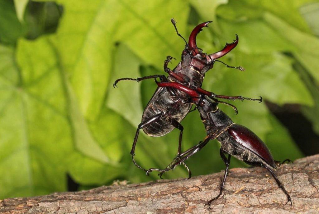 насекомые москвы фото и названия относится больше горным