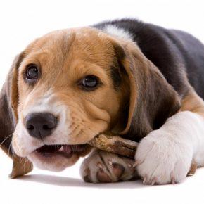 Клички для собак мальчиков 🐕🐶 — легкие, редкие и самые красивые имена для собак по алфавиту