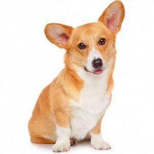 Клички для собак мальчиков — легкие, редкие и самые красивые имена для собак по алфавиту