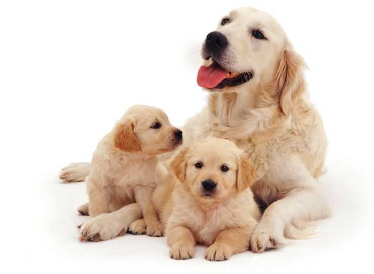 Клички для собак девочек — список красивых, смешных, необычных кличек для больших и маленьких пород собак