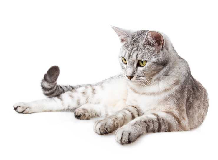 Клички для кошек девочек по алфавиту 🐈: инструкция, как назвать котенка девочку прикольно и необычно