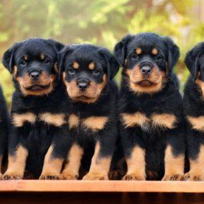 Клички для собак девочек 🐕🦺 — список красивых, смешных, необычных кличек для больших и маленьких пород собак